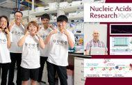 '장애물달리기 선수처럼'… DNA 손상 찾는 단백질 원리 규명