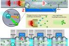 연구그림-연구-개요도-영문-원본-MICE-연구-그룹단-제공.jpg
