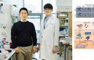 혈관병 고치고, 3D 바이오 프린팅에 쓸 '혈관줄기세포'