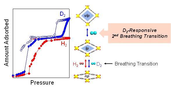 그림2. 중수소에 의해서 2차 호흡 현상이 선택적으로 발생함