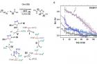 그림1_화학반응-모식도와-각-분자의-확산계수-변화.png