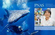 가장 큰 '물고기' 고래상어 게놈 해독: 장수 비밀 풀리나