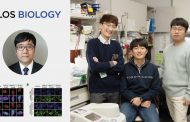 루게릭병 억제하는 새로운 유전자 경로 발견