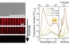 연구그림-개발된-메타물질-변형-기술의-성능-빛-세기-및-광역-주파수-변화.jpg