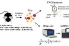 연구그림-단세포-전사체-분석-기술을-활용한-면역항암제-작용-기전-규명.jpg