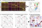 연구그림-종양-내-T세포-그룹-분석-결과와-두-종류의-면역-항암제의-면역-환경-개선-결과-비교.jpg