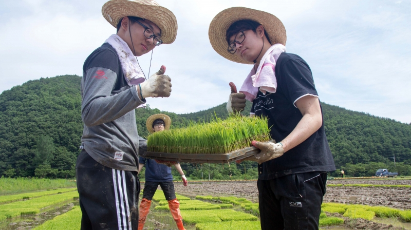 Jae Hun Jeong (Left), Division of General Studies and Jae-Hoon Ahn (Right), School of Energy and Chemical Engineering are posing for a portrait while holding a seedbed of rice at the rural community outreach project. [Photo Credit: Jin Woo Park from Studio INGAM]