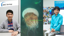 New Genomics Approaches to Nomura's Jellyfish Sheds Light on Early Evolution of Active Predation