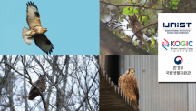Scientists Identify the Genetic Basis of Predation and Nocturnality in Raptors