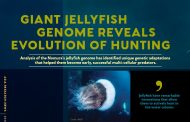 """Jellyfish have remarkable innnovations that allow them to actively hunt in the water column."""