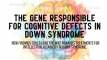 """New findings could lead the way towards treatments for intellectual disability in Down syndrome."""