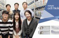 UNIST Researchers Unveil Blood Stem Cell-generating Mechanism