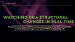 Watching DNA Structural Changes in Real-Time!
