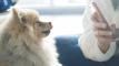 UNIST Startup Makes Pet Registration Smart and Simple!